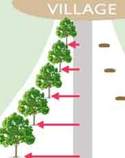 Traffic Calming Trees